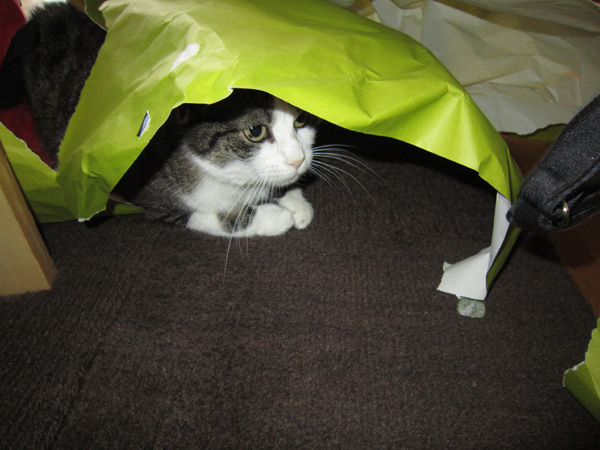 Mes chats - Page 9 Copie-99