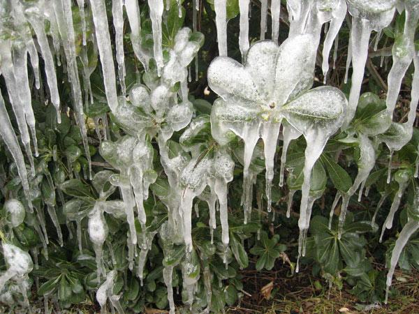 21 - Paysages d'hiver.........photos reçues !!! - Page 4 Copie149
