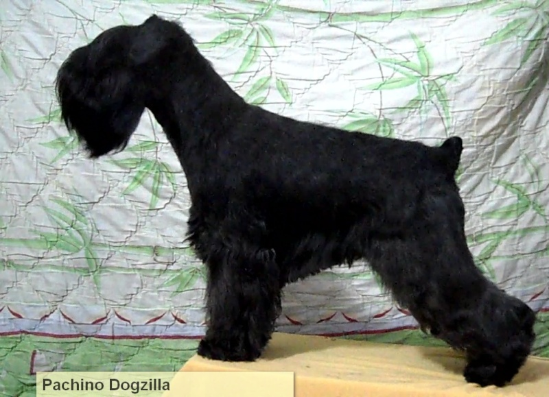 Pachino Dogzilla Dogzil10
