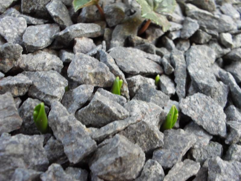 Automne 2011 : le jardin témoin Hiver_13