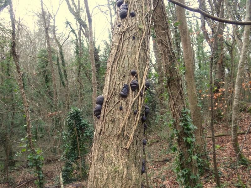 Champignons dans les arbres 04910