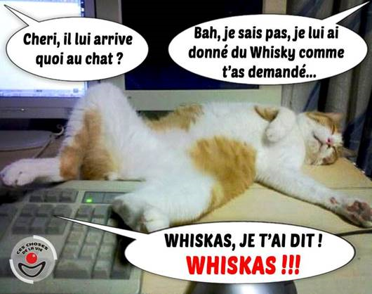 Humour en image ! - Page 17 Chat10