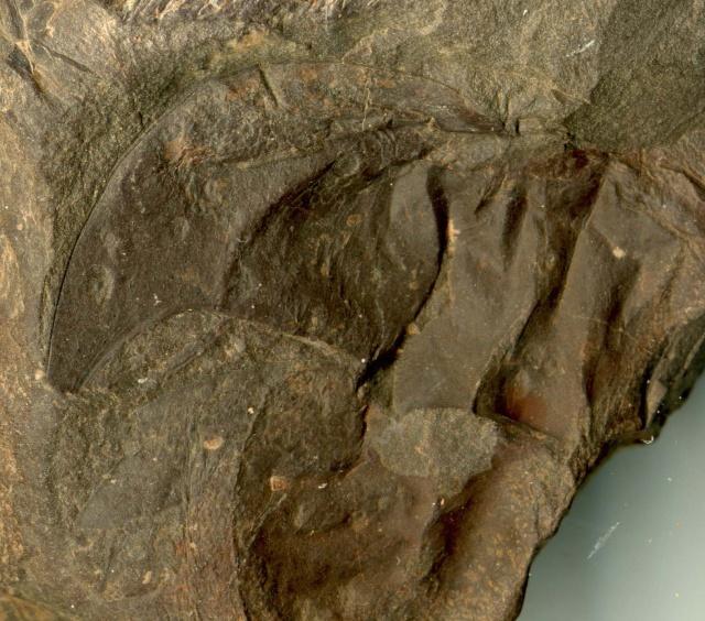 libellule, araignée et insecte fossiles Sortie11