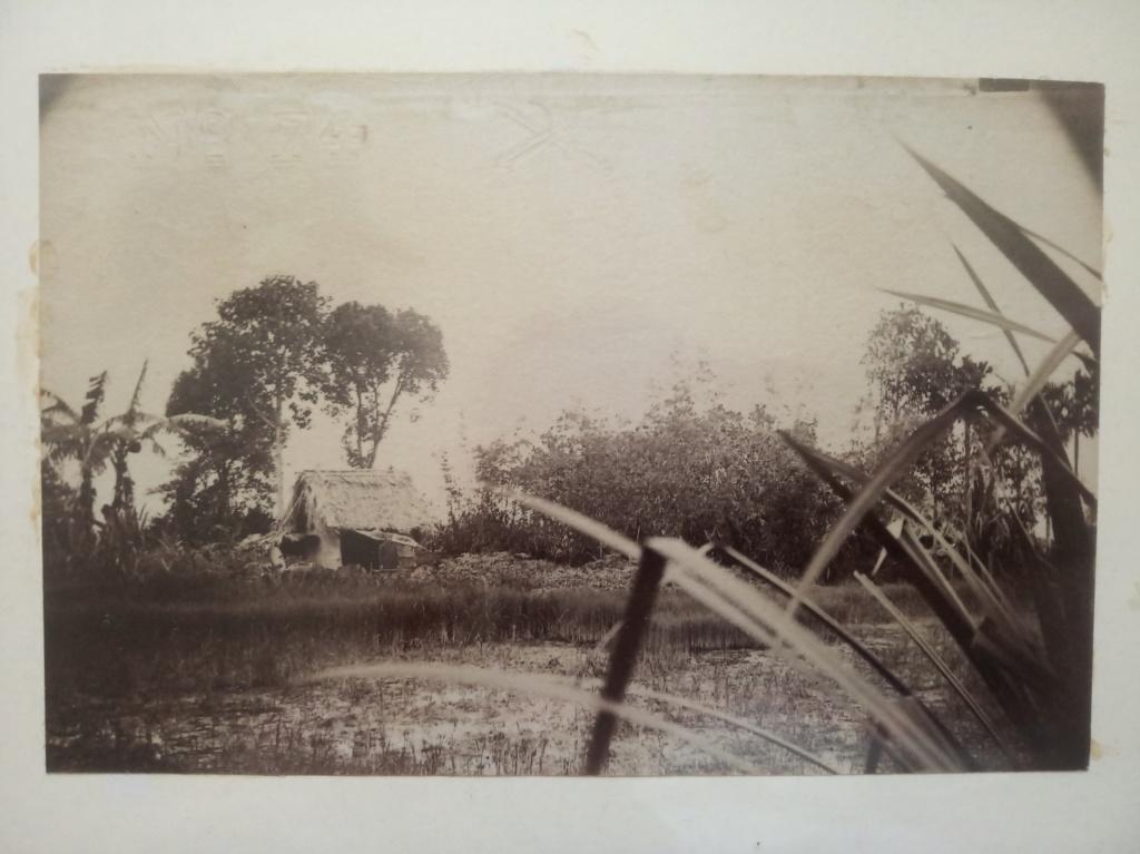Petite nature morte coloniale et front d'Orient (1883-1917) Img_2468