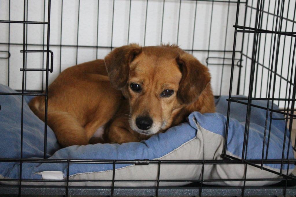 Cosmo - mâle - fourrière de Târgu Frumos - Réservé adoption (68) Img_2910