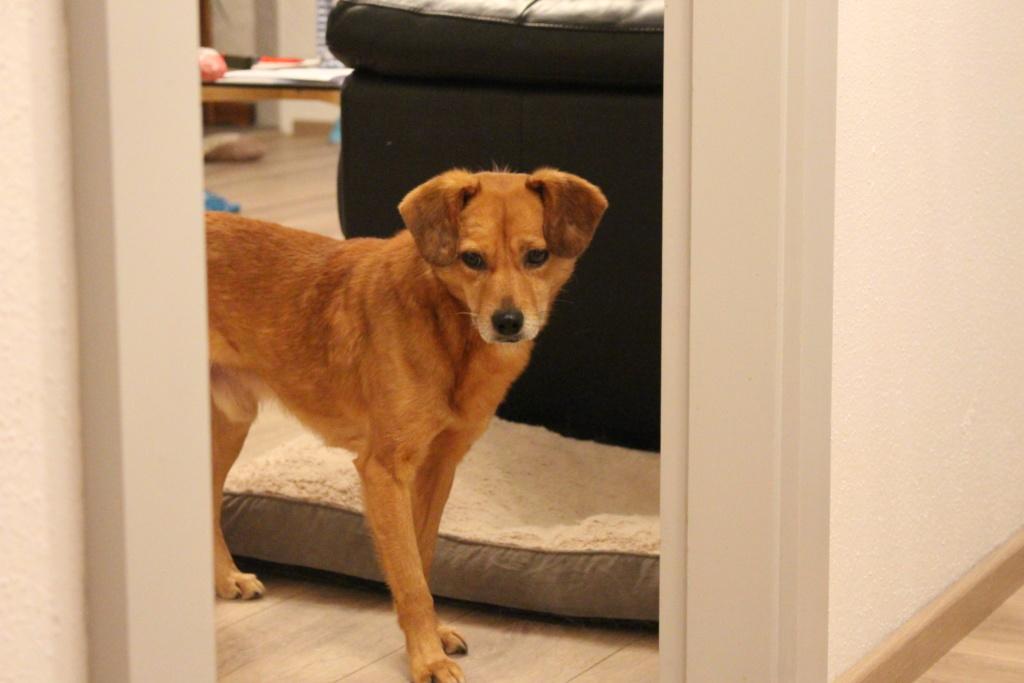 Cosmo - mâle - fourrière de Târgu Frumos - Réservé adoption (68) Img_2911