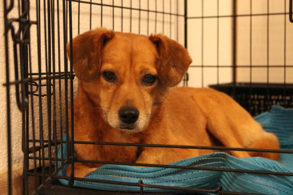 Cosmo - mâle - fourrière de Târgu Frumos - Réservé adoption (68) Img_2912