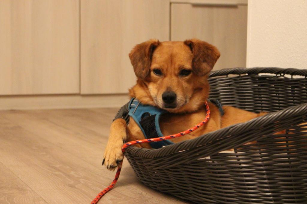 Cosmo - mâle - fourrière de Târgu Frumos - Réservé adoption (68) Img_2913
