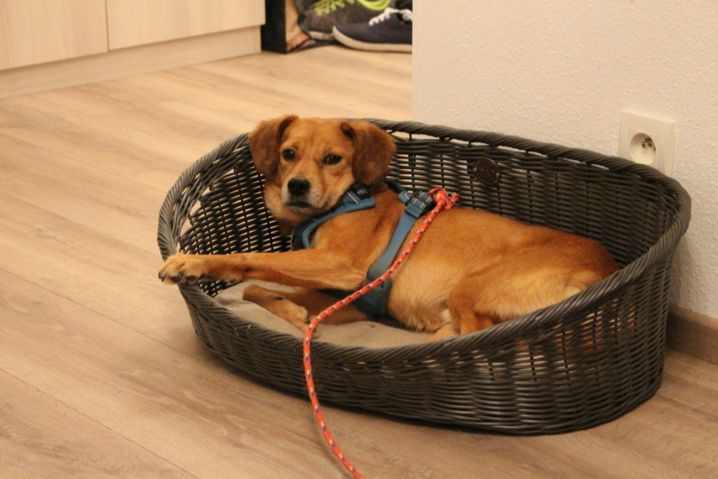 Cosmo - mâle - fourrière de Târgu Frumos - Réservé adoption (68) Img_3010