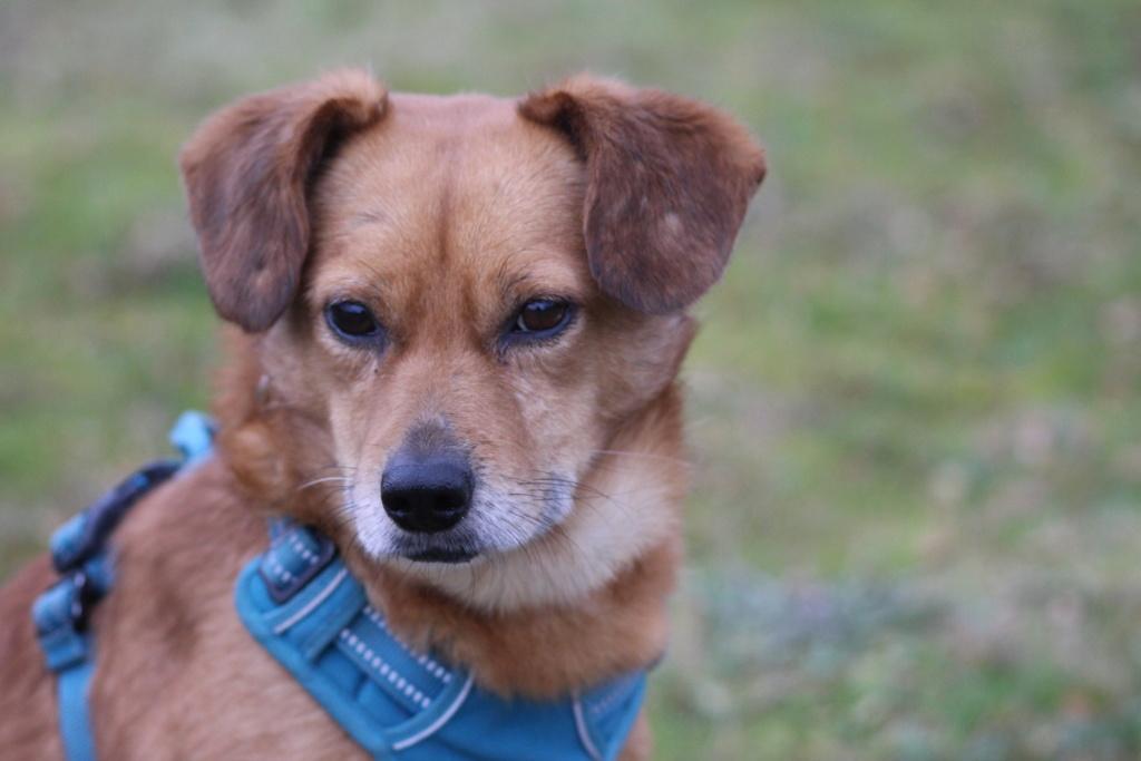 Cosmo - mâle - fourrière de Târgu Frumos - Réservé adoption (68) Img_3110