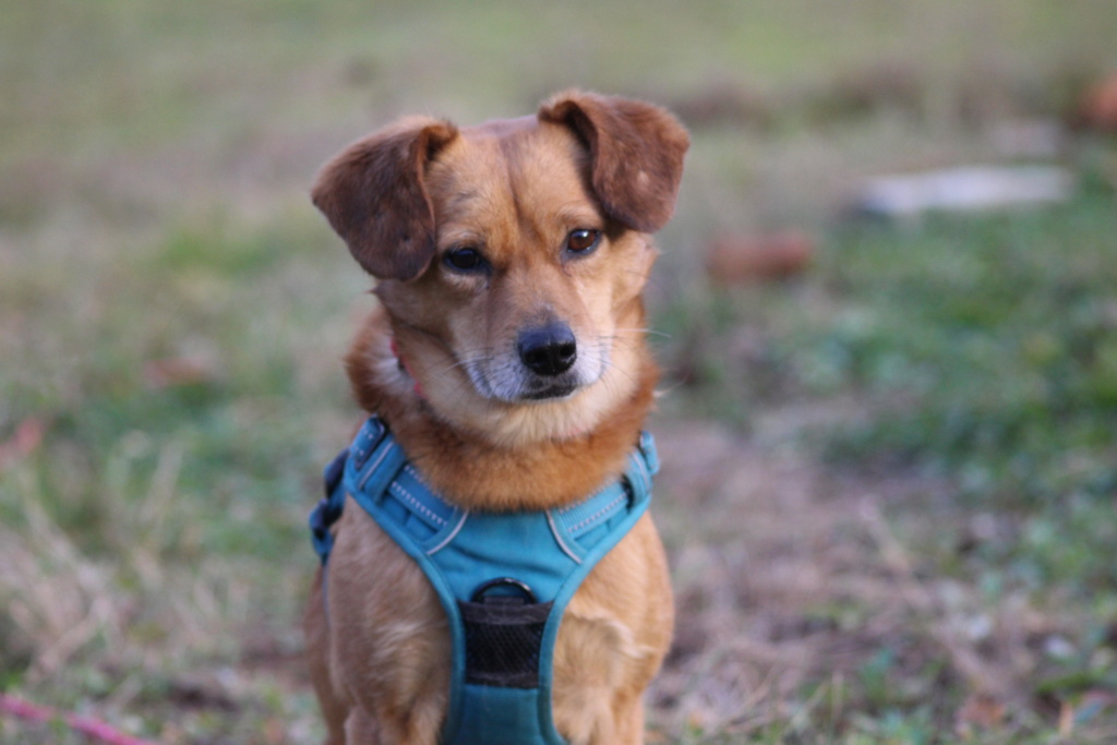 Cosmo - mâle - fourrière de Târgu Frumos - Réservé adoption (68) Img_3111