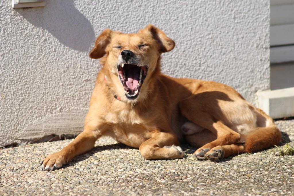 Cosmo - mâle - fourrière de Târgu Frumos - Réservé adoption (68) Img_3712