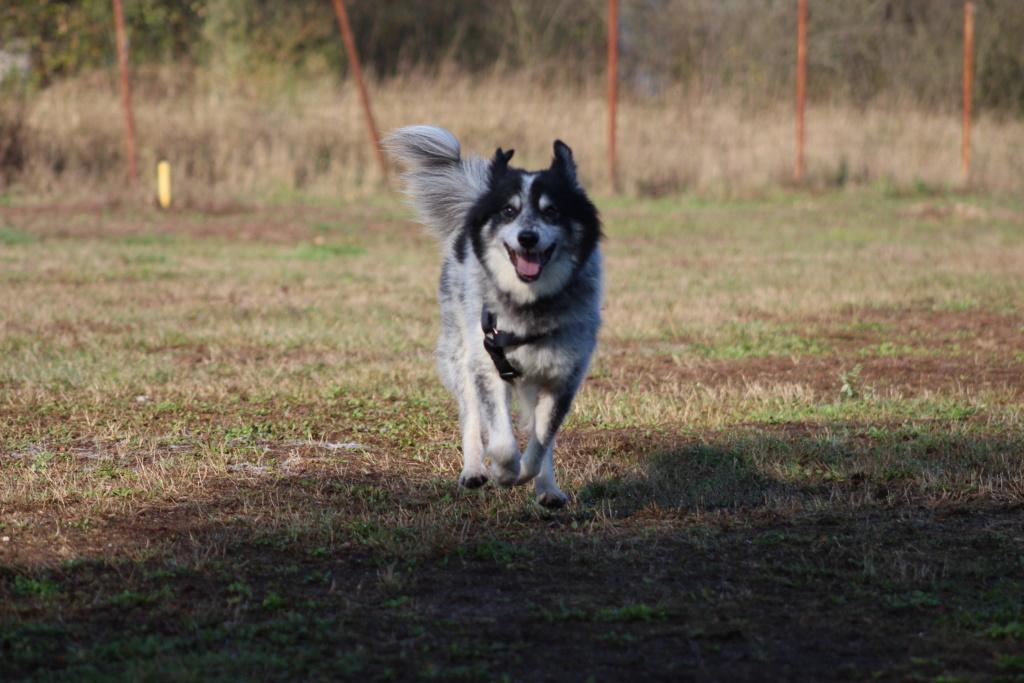 Scottie - mâle - Fourrière de Târgu Frumos - Frais d'adoption réduits - En famille d'accueil dans le 67 Img_7610