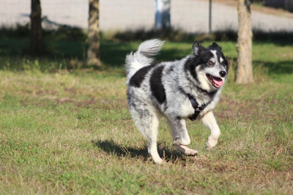 Scottie - mâle - Fourrière de Târgu Frumos - Frais d'adoption réduits - En famille d'accueil dans le 67 Img_7611