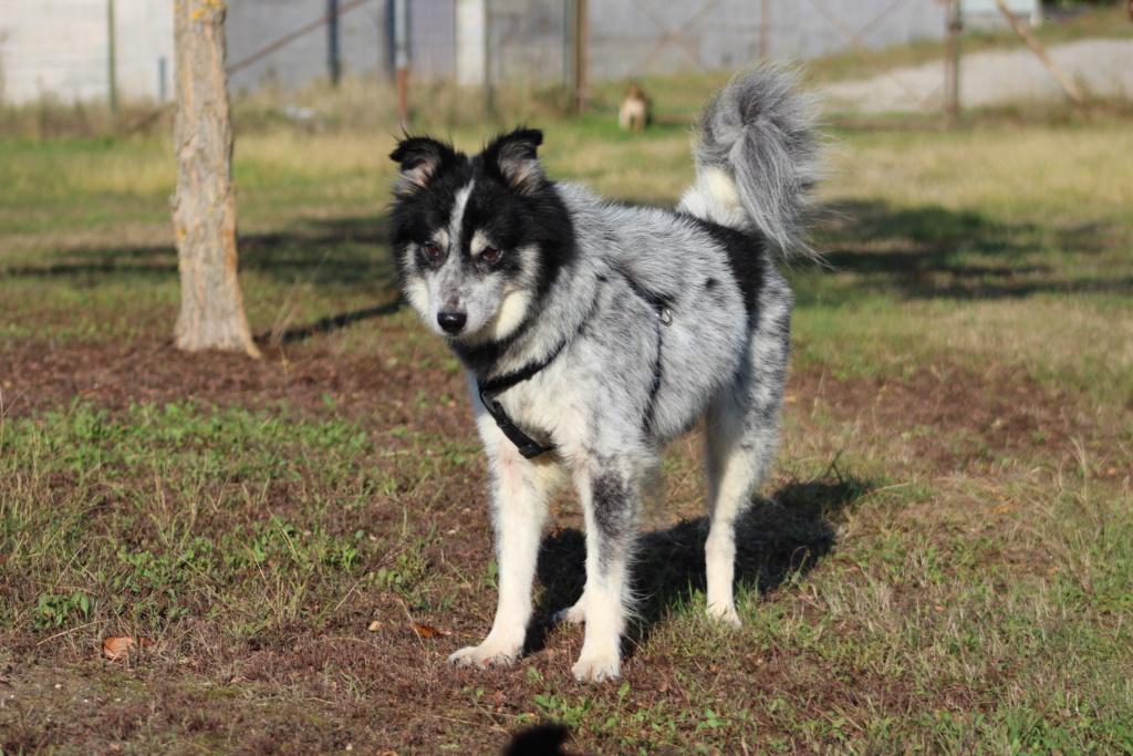 Scottie - mâle - Fourrière de Târgu Frumos - Frais d'adoption réduits - En famille d'accueil dans le 67 Img_7612