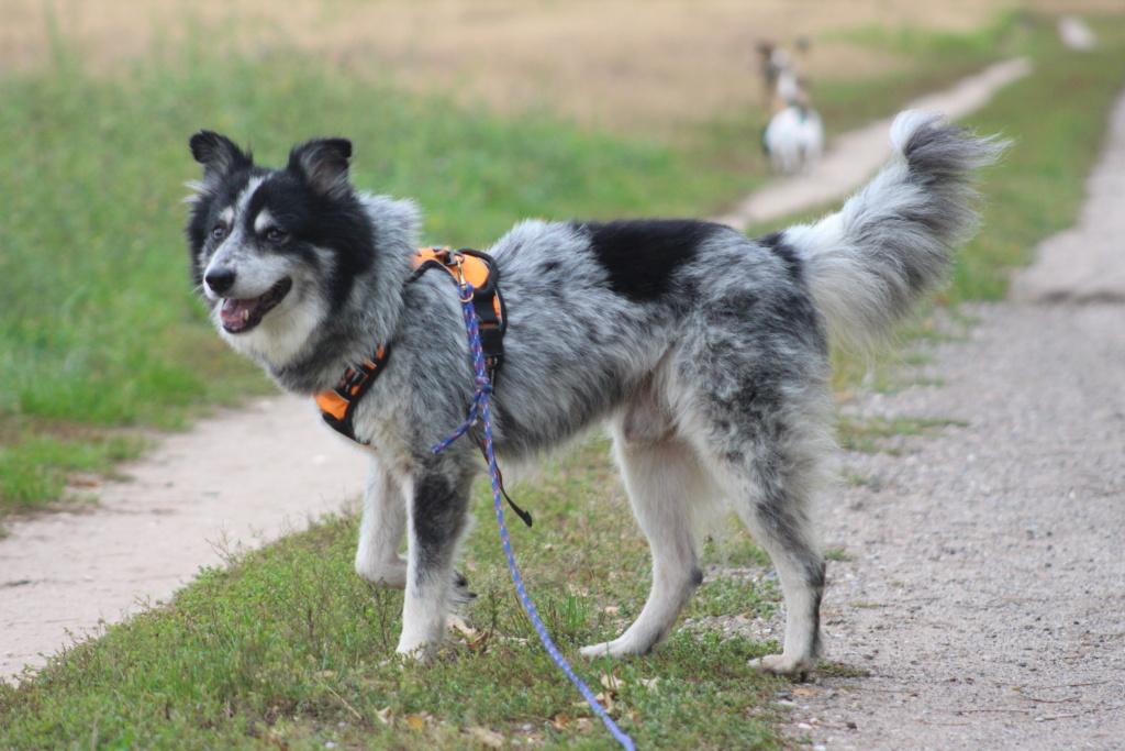 Scottie - mâle - Fourrière de Târgu Frumos - Frais d'adoption réduits - En famille d'accueil dans le 67 Img_7912