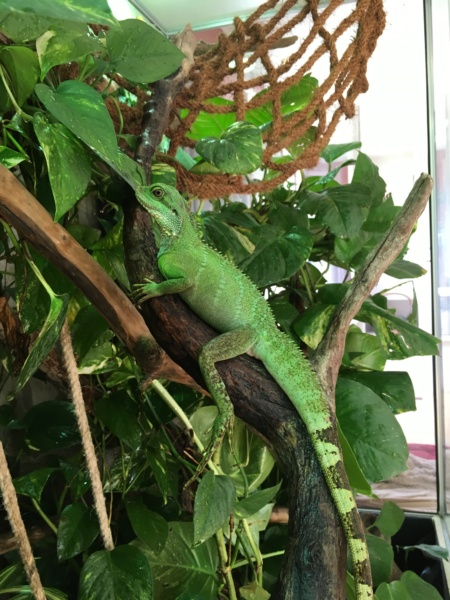 Ma famille de reptiles ! - Page 15 Img_2210