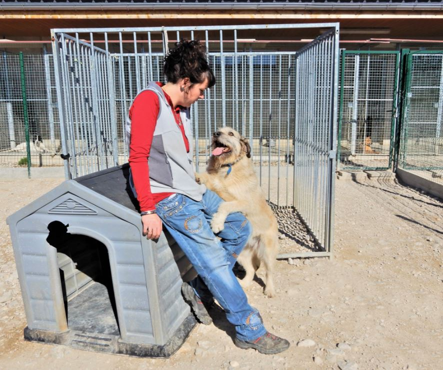 JULIA, F-X, née 2013 - 17 kg - Adorable (BELLA) Prise en charge SPA PONTARLIER - Page 3 Img_7811