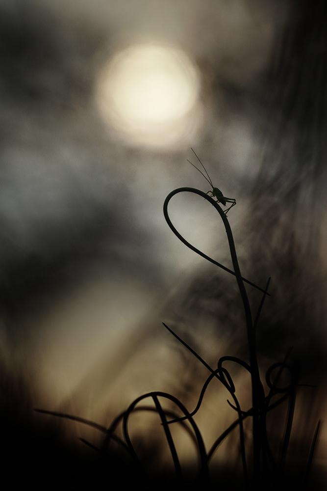 La sauterelle qui hurlait à la lune... Img_1612