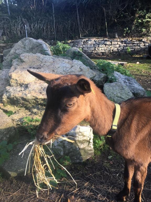 IDEM - Chèvre réformée d'élevage - Page 3 41c0ef10