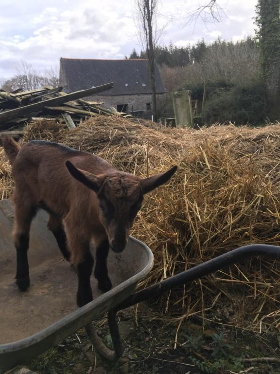 Pareille - Fille d'Idem (réformée d'élevage) 7002e110