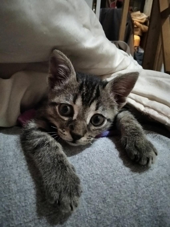 Ένα ποντικάκι στο...γατοσπιτικό μας!(Υιοθετήθηκε!) Img-0610