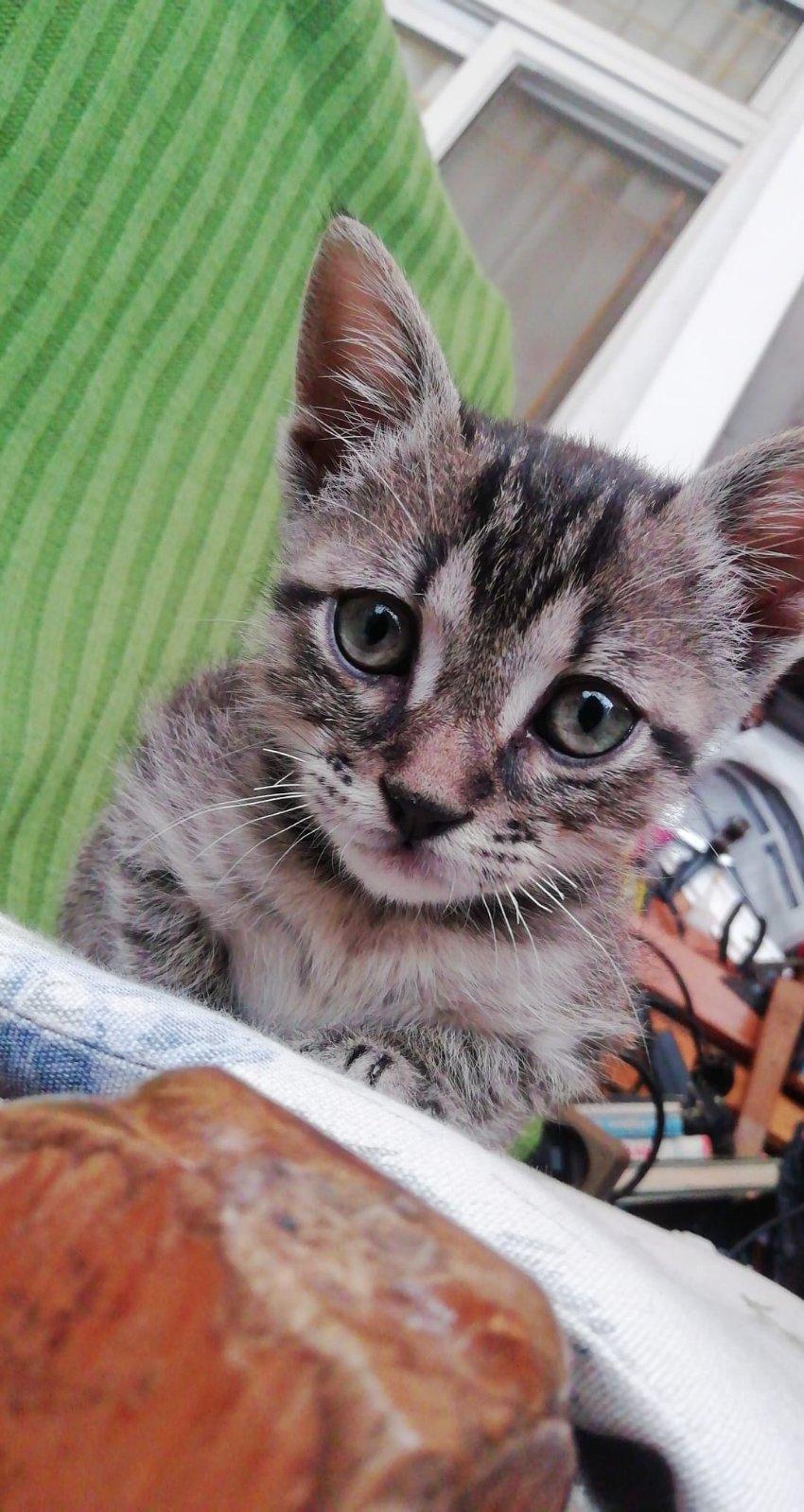 Ένα ποντικάκι στο...γατοσπιτικό μας!(Υιοθετήθηκε!) Img-1e10