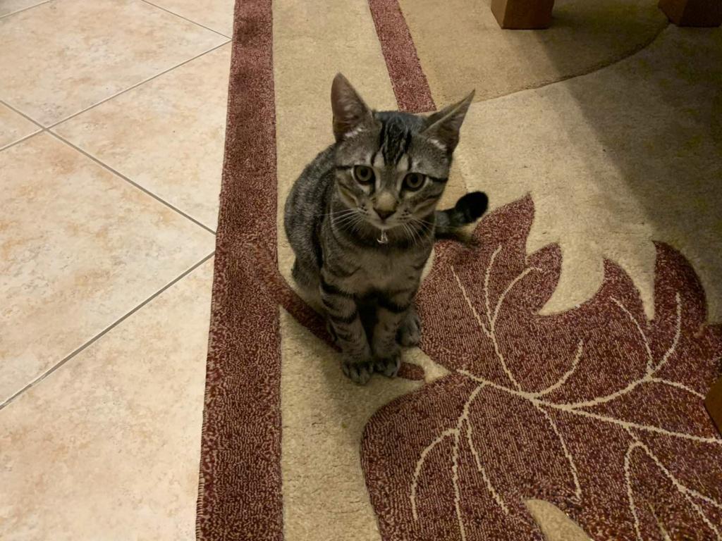 Ένα ποντικάκι στο...γατοσπιτικό μας!(Υιοθετήθηκε!) Img-a710
