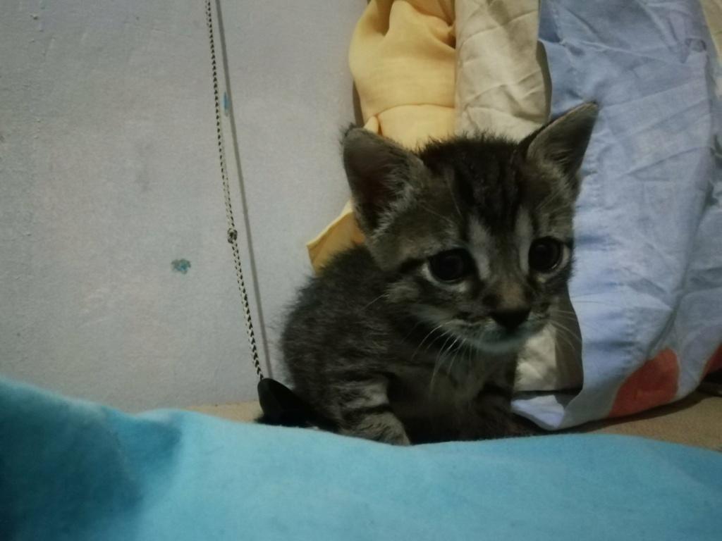 Ένα ποντικάκι στο...γατοσπιτικό μας!(Υιοθετήθηκε!) Img-cb10