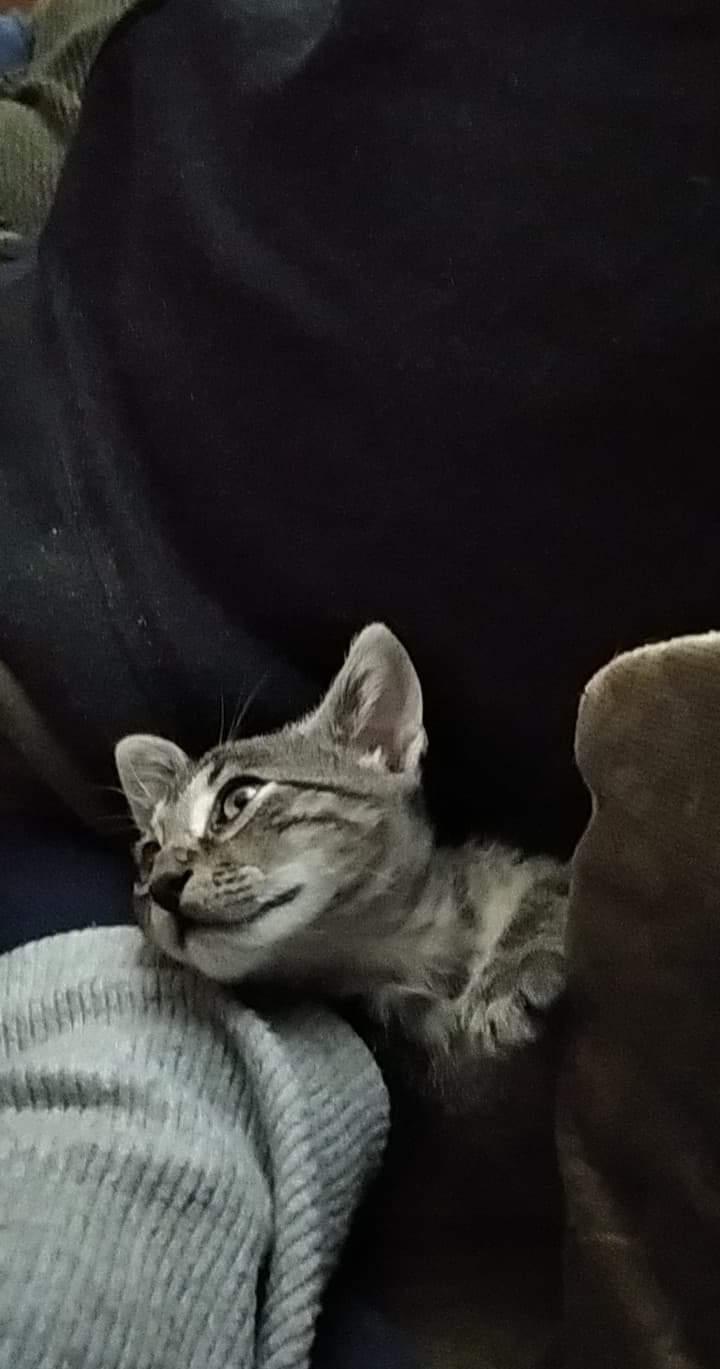 Ένα ποντικάκι στο...γατοσπιτικό μας!(Υιοθετήθηκε!) Img-d210