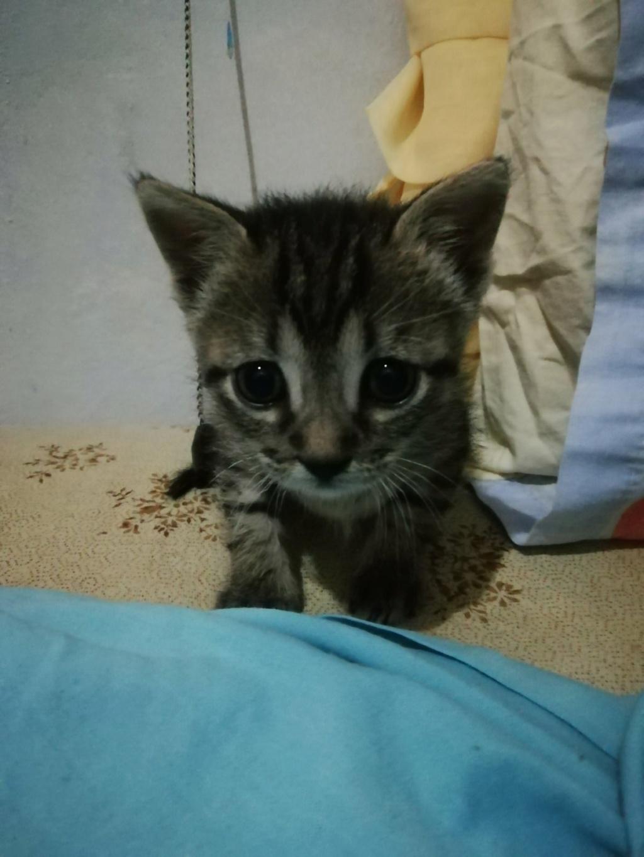 Ένα ποντικάκι στο...γατοσπιτικό μας!(Υιοθετήθηκε!) Img-f710