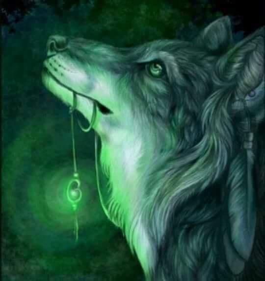 معلومات قد لا تعرفها عن الذئب Eeeoe107