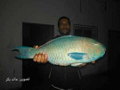 اصطياد اغرب سمكة في بحر غزة Eeeoee52