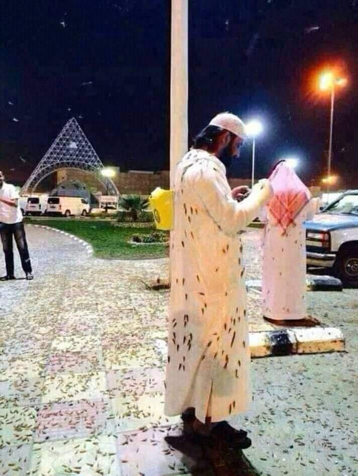 الملايين من الصراصير تنتشر حول المسجد الحرام والمسجد النبوي ويعطل الصلاة لأول مرة Eeeoee78