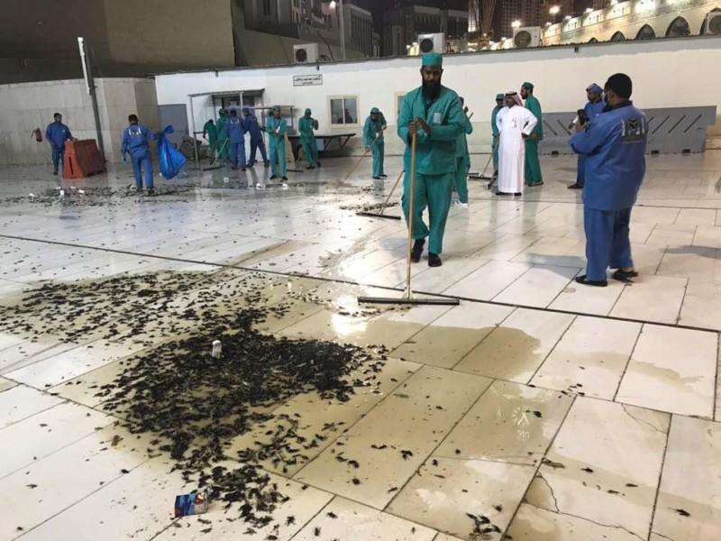 الملايين من الصراصير تنتشر حول المسجد الحرام والمسجد النبوي ويعطل الصلاة لأول مرة Eeeoee81