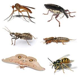 Quelle est la cause des insectes à la. ?maison Eeeoeo14