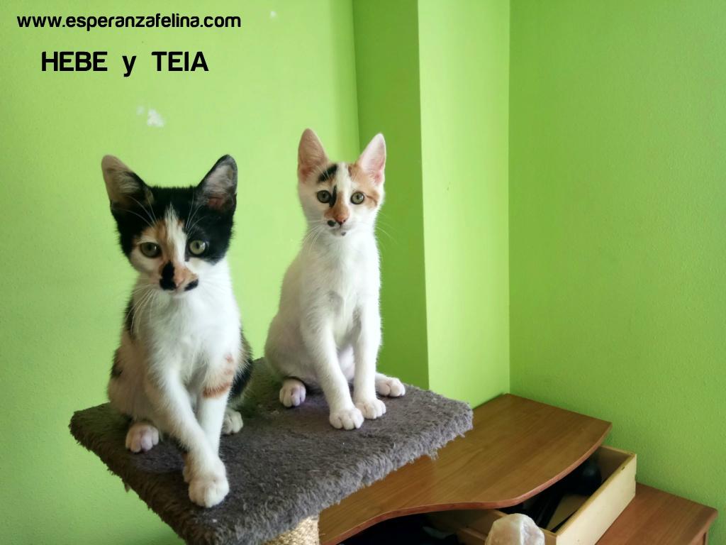 Teia y Hebe ,cachorros en adopción. Álava, España (f.n aprox 16/04/2019) Aaa_t10