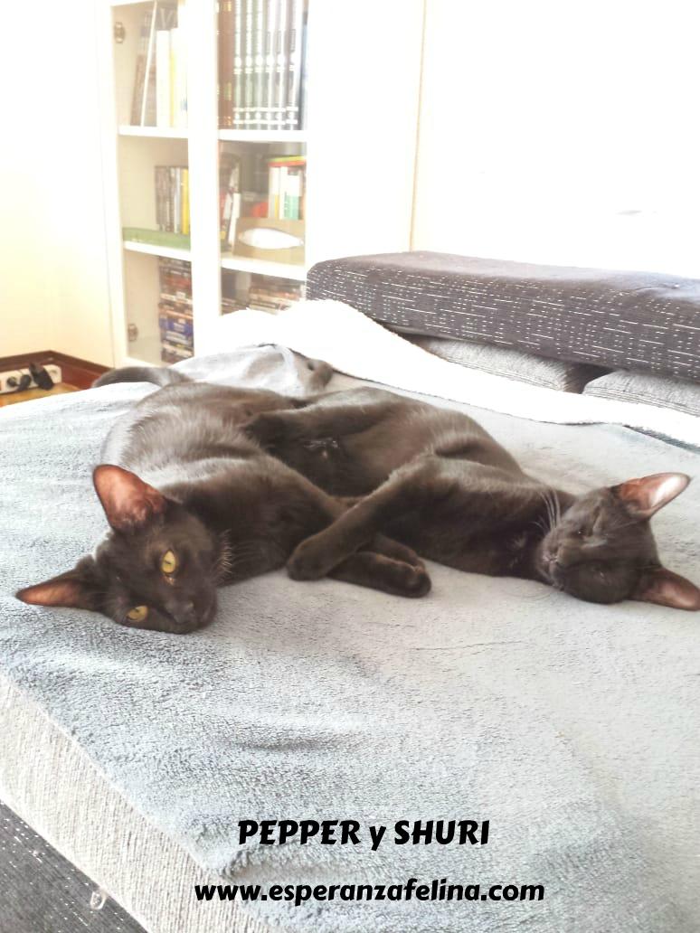 Pepper y Shuri,  panteritas buscan hogar. Álava (F.N: 20/04/2018)   Img-2051