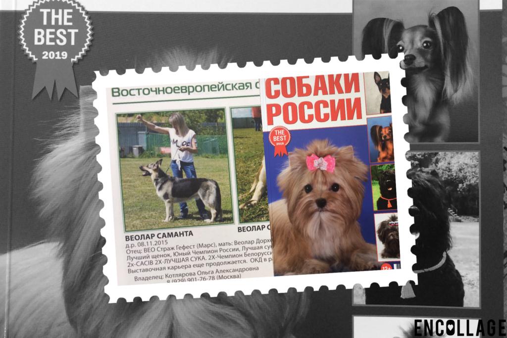 ВОСТОЧНО-ЕВРОПЕЙСКАЯ ОВЧАРКА ВЕОЛАР САМАНТА - Страница 8 Img_9710