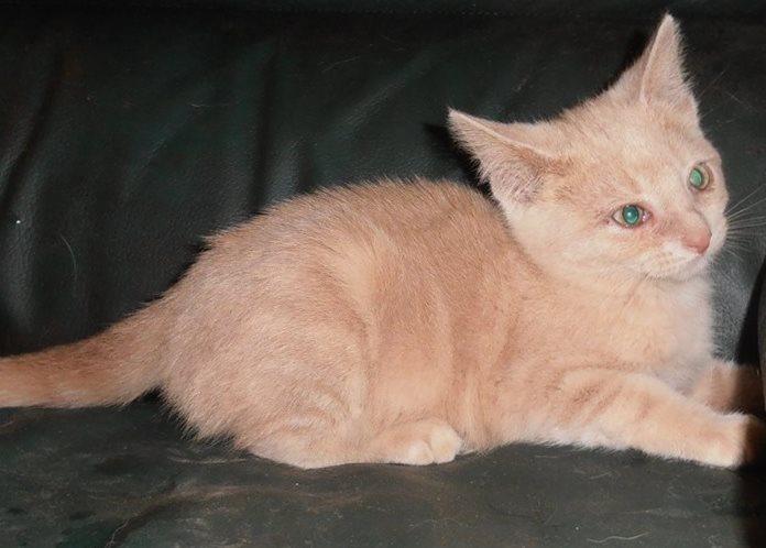 Carotte née en 2015 adoptée par Elisabeth 10304310