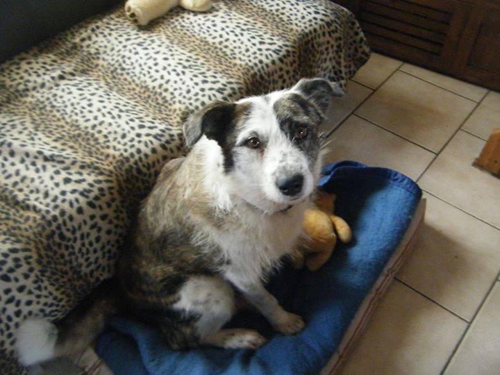 Suzie née en 2012 Adoptée par Ludivine 10636310