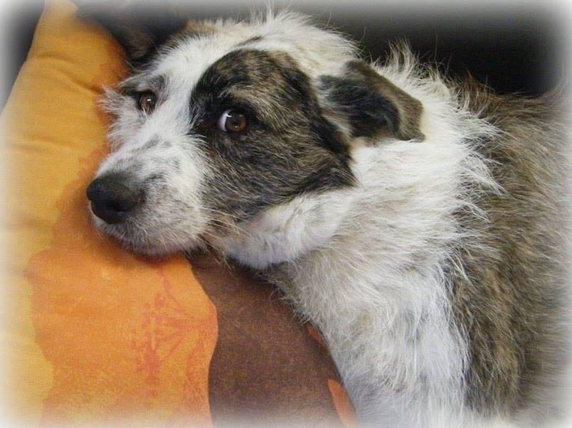 Suzie née en 2012 Adoptée par Ludivine 10868110
