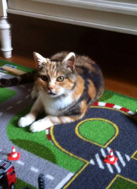 Poupette née en 2009 Adoptée 10888410