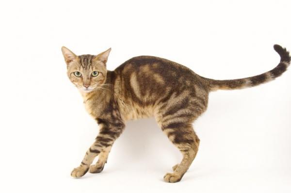Animales Comunes (o mascotas) Img_6510