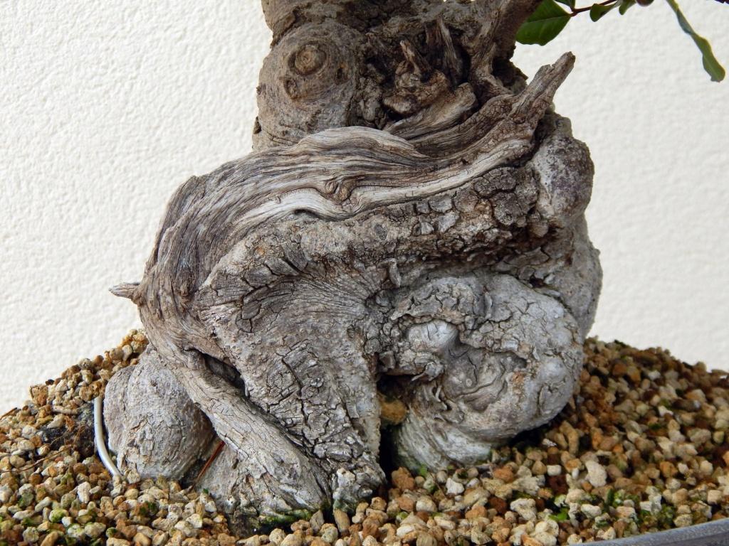 Algarrobo (Ceratonia siliqua ) 2 38761710