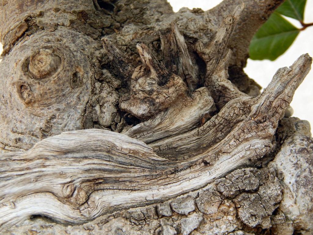 Algarrobo (Ceratonia siliqua ) 2 38910310