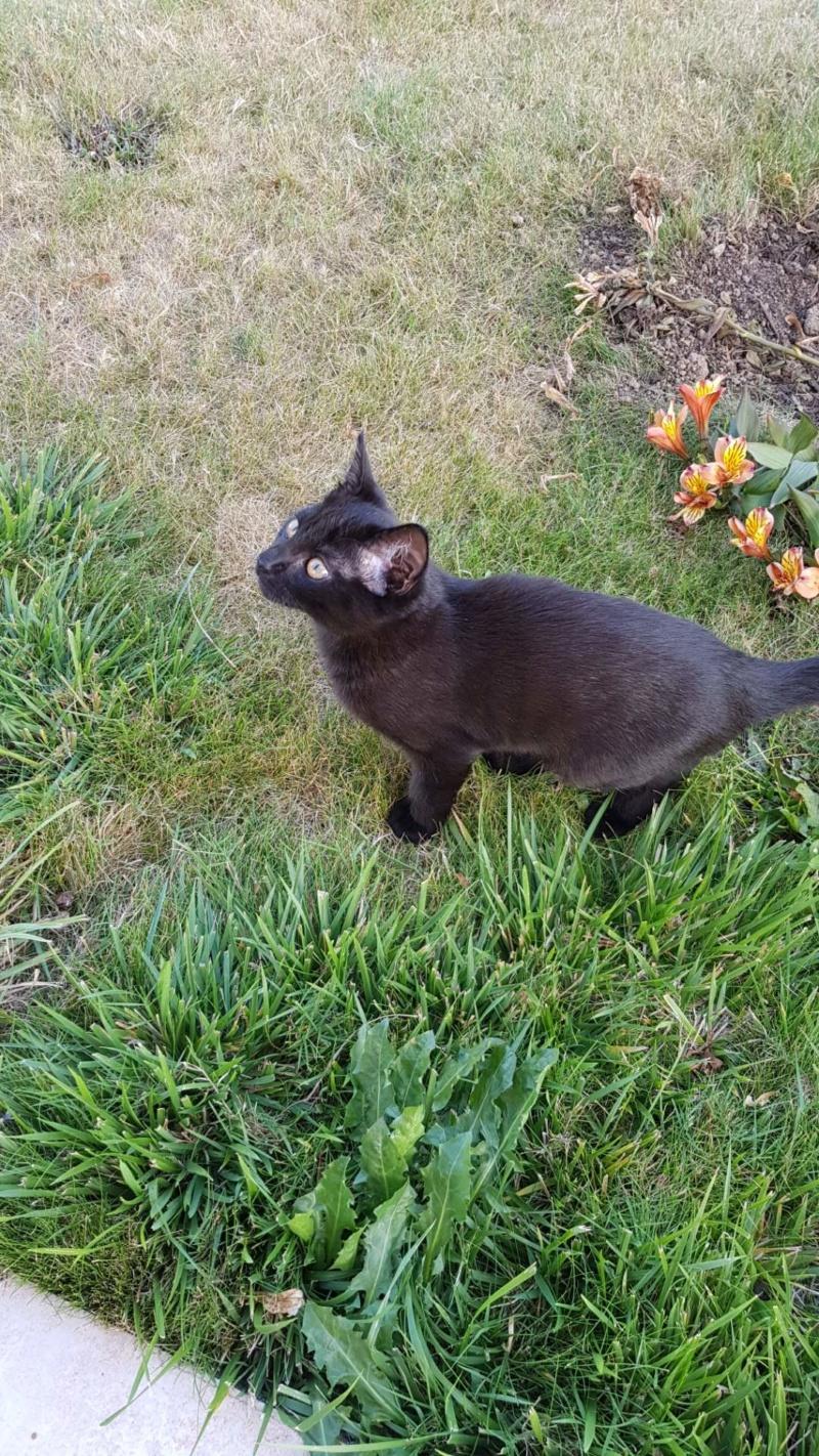 Ouzo, chaton mâle noir, né le 30.03.2018 04bbc910