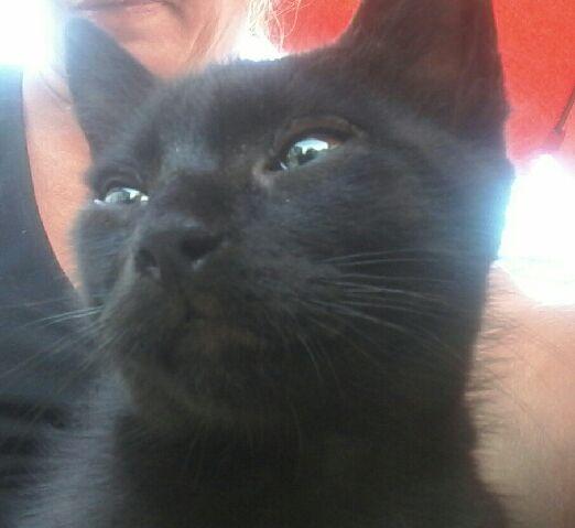 Oudini, chaton mâle noir, né le 12.04.2018 792d0510
