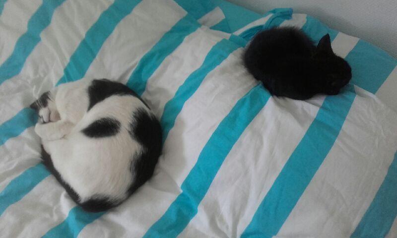 Oudini, chaton mâle noir, né le 12.04.2018 A5320810