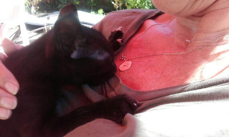 Oudini, chaton mâle noir, né le 12.04.2018 A678f410